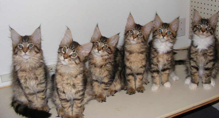all six kittens